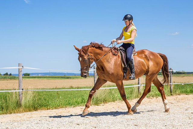 With summer in full swing, horse riding can be one of the most enjoyable ways to keep fit and enjoy some of the elusive British sun. Equine obesity can be a real problem for many horse owners during the summer months; so as well as keeping your four-legged friend fit and healthy, here are some of the ways that riding can help to keep you in shape.